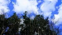 2018.11.4  渓流と落ち葉 - river side