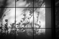 Shadow Picture On A Shoji Screen - SILENT SOLILOQUY