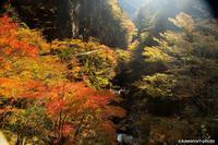 紅葉の釜ヶ谷峡/徳島県那賀郡 - kawanori-photo