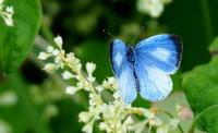 いよいよ終盤 - 紀州里山の蝶たち