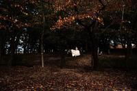 花嫁は落ち葉の道を - Yoshi-A の写真の楽しみ
