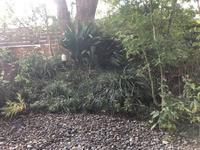 庭を整える - totomoni blog
