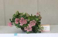 むさしの山草会展示会その2 - 野山の花たち