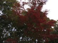 夕紅葉 - 花の自由旋律