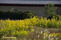 平城宮跡の秋 - カンちゃんの写真いろいろ