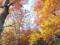 日光細尾峠から中禅寺湖の紅葉めぐり(前編)Lake Chūzenji in Nikkō National Park - やっぱり自然が好き