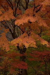 秋の撮影行④ - 光画日記