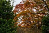 紅葉の始まり - 彩りの軌跡