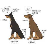 アキラの色設定 - 山田南平Blog