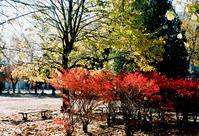 穏やかな陽光とフワフワ落ち葉と車検タイヤ交換 - 照片画廊