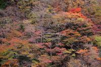 天川村神童子谷の秋 - ratoの山歩き