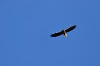 冬の王者と、冬の使者 - 北の大地で野鳥ときどきフライフィッシング