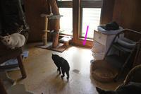 猫神様はサービス精神旺盛その28リビングデビューその1 - りきの毎日