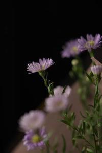 土曜日の花束 - 明日もなんとなく