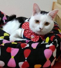 猫ベッド - 素人木工雑貨と犬猫日記