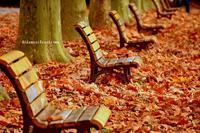 ベンチと落ち葉と陽だまりと - 陽だまりベンチ+me