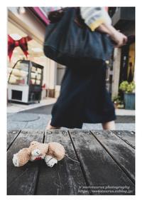 落とし物 - ♉ mototaurus photography