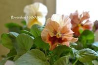 多彩な花色も魅力的♪冬を彩る「パンジー・ビオラ」。 - 花色~あなたの好きなお花屋さんになりたい~