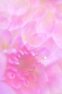 うれしい時間 - お花びより