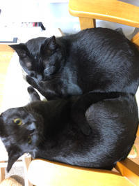 角館 - 愛犬家の猫日記