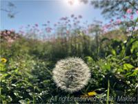 穏やかな秋晴れ - My Filter     a les  co les   Photographies