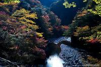 紅葉の釜ヶ谷峡/徳島県那賀郡 #2 - kawanori-photo