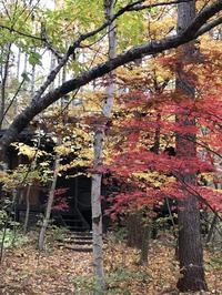 新そば祭り - 木洩れ日の森から