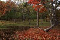 駒出池キャンプ場 - yutorieの庭②