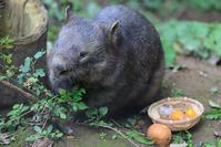 11月8日(木)無頓着 - ほのぼの動物写真日記