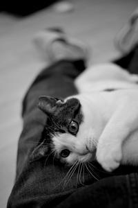 いろいろ猫 - HUKUとか写真とか