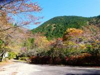 紅葉真っ盛り高賀山 (1,224.2M)    登頂 編 - 風の便り