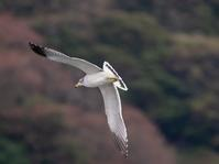 漁港の鳥さん - 下手の横好き