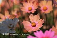 植物園に行く11月-3 - 写楽彩2