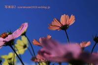 植物園に行く11月-6 - 写楽彩2