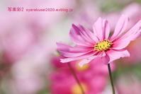 植物園に行く11月-7 - 写楽彩2