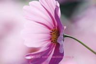 植物園に行く11月-9 - 写楽彩2