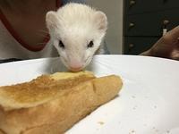 食いしんぼうピースケ - いたち生活