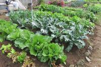 菜園の様子 - 光さんの日常