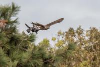 捕まえた - 趣味の野鳥撮影
