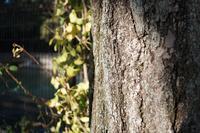 樹 - カメラノチカラ