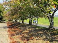 秋散歩 - 猪こっと猛進