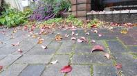 花水木の落ち葉 - がちゃぴん秀子の日記
