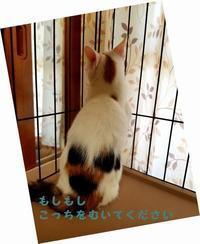 しゃびしくないもん - 八幡地域猫を考える会