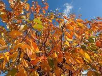 落葉掃き - 北緯44度の雑記帳