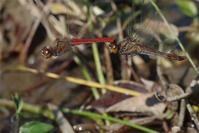 いよいよ終盤 - 蝶と蜻蛉の撮影日記