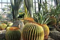 2校トライやるウィーク・その2(朝日中、飾磨東中) - 手柄山温室植物園ブログ 『山の上から花だより』