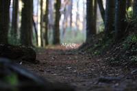 Walking - Aruku