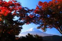 30年10月の富士(18)河口湖もみじトンネルの富士 - 富士への散歩道 ~撮影記~