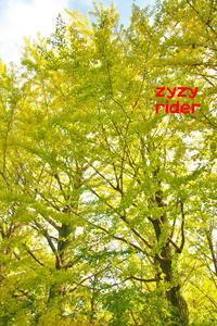 黄色い葉っぱへ - ジージーライダーの自然彩彩