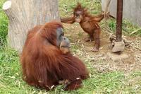生後8ヵ月のポポちゃんは、つかまり立ちができるようになりました(市川市動植物園) - 旅プラスの日記